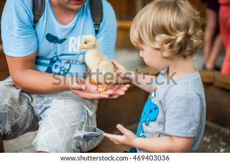 Toddler boy play with the ducklings in the petting zoo