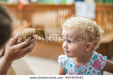 Toddler girl play with the ducklings in the petting zoo