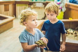 toddlers boy and girl caresses and playing with turtle in the petting zoo. concept of sustainability, love of nature, respect for the world and love for animals. Ecologic, biologic, vegan, vegetarian.