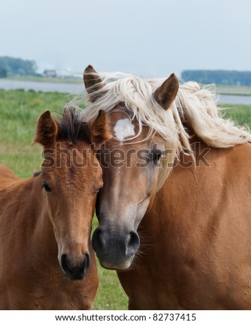 Together, duo portrait of a mare and her foal in a Dutch landscape