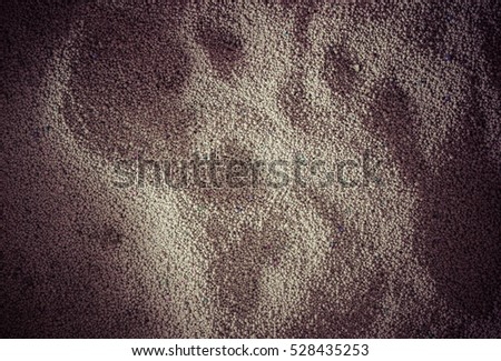 toilet cat Cleaning sand cat