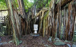 Toilet in the tropical jungle forest. Unusual natural bathroom idea.