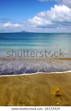 Toitoi tip rolls along the sand near the water's edge with rangitoto in the background