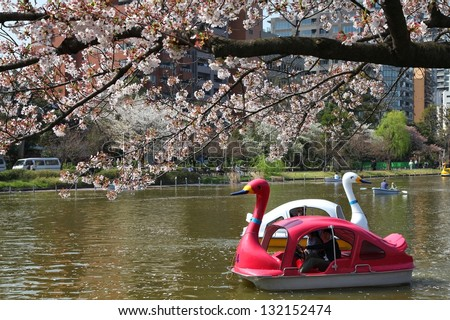 TOKYO - APRIL 12: Visitors enjoy cherry blossom (sakura) on April 12, 2012 in Ueno Park, Tokyo. Ueno Park is visited by up to 2 million people for annual Sakura Festival.