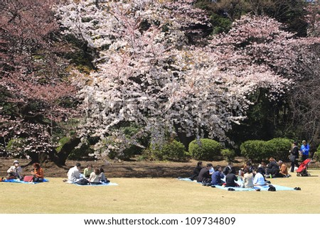 TOKYO, JAPAN - APRIL 2 2009: People eating and enjoying spring at the cherry blossom celebration (called hanami) at Tokyo park on April 2, 2009 in Tokyo, Japan. - stock photo