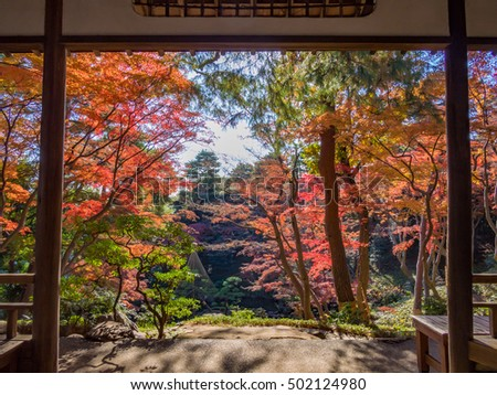 TOKYO, JAPAN - DEC 7: Autumn leaves at Tonogayato Garden in Tokyo, Japan on December 7, 2015. Tokyo is both the capital and largest city of Japan. - Shutterstock ID 502124980