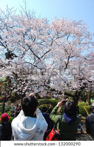 TOKYO,JAPAN-March 30:Tourists use a cell phone camera to take picture of Sakura cherry blossoms at Ueno park on March 30,2010 in Tokyo,Japan.Ueno Park was Japan�s first public park, opened in 1873.