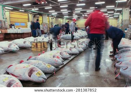 Tokyo, Japan - May 10, 2015: Famous Tuna auction at Tsukiji fish market. Tsukiji is the biggest fish market in the world. The Tuna auction is the main attraction for tourists, No flash allowed.