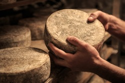 Toma production, a tipical italian cheese