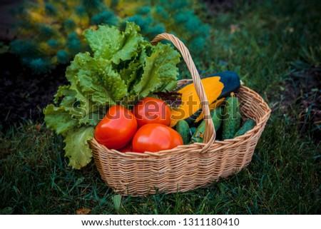 Tomato cucumber fresh #1311180410