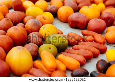 Tomato cultivars. colorful variety of organic tomato. Different varieties of red, orange, yellow tomatoes