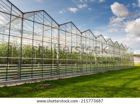 tomato greenhouses against the blue sky