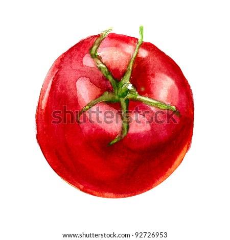 tomato  watercolor pai...