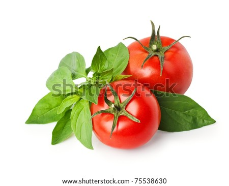 tomatoes and basil isolated on white.