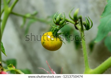 Tomatoes and horticultural crops in an organic garden. #1213750474