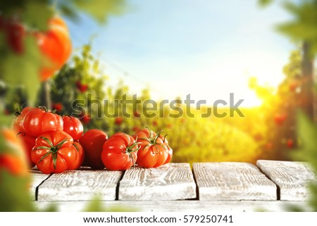 Tomatoes and summer day  #579250741