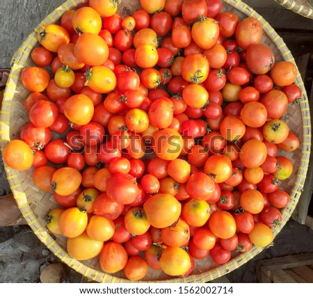 Tomatoes are red vegetables that have a sour taste