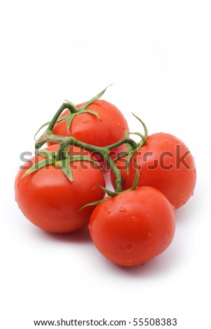 tomatoes on the branches on a white background