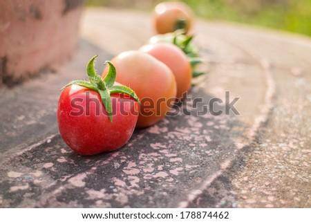 Tomatoes  ripe