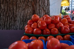 Tomatoes stacked on an outdoor table at a farmer's market. Some of the large vibrant red tomatoes are in blue plastic quarts. There's a large tree in the background. The table is covered in tomatoes.