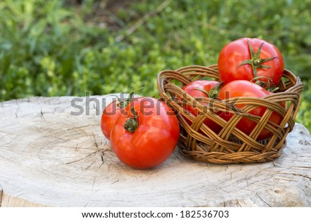 Tomatoes with herbs on the old wooden table , blurred grass background