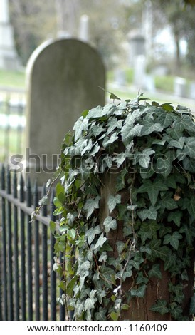 Tombstone in cemetery with Ivy Fence