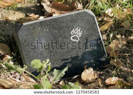 tombstone on pet's grave ストックフォト ©