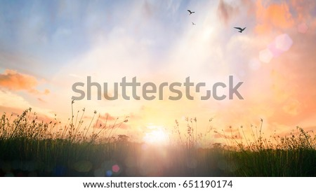 Tomorrow and calm nature concept: Beautiful country field meadow with sun and sky sunrise background.