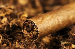 tompus, a cigar, which is made from tobacco leaves and is entirely made of tobacco, and in this picture it stands on tobacco.