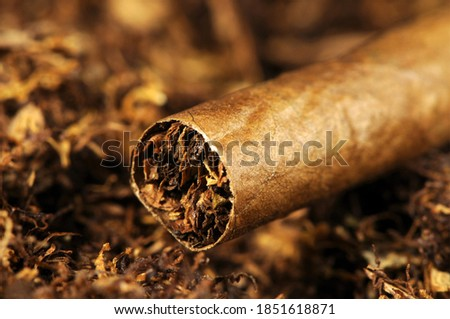 tompus, a cigar, which is made from tobacco leaves and is entirely made of tobacco, and in this picture it stands on tobacco. Stock photo ©