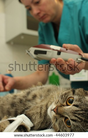 TOMSK, RUSSIA - NOVEMBER 25: Preparations for the surgical sterilization of cat in banian hospital, November 25, 2009 in Tomsk, Russia.