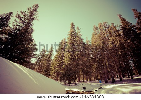 toned landscape in the mountains of freeride track. near trees can be considered a snowboard.