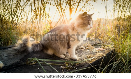 Toned photo of cat sitting on log at lake at sunrise