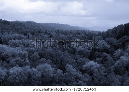 Toned spooky picturesque forest in mist on cloudy summer day. Nature background in blue tones stock photo