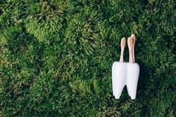 Toothbrush stand shaped like primary molar tooth with toothbrushes on green moss background. Top view. Copy space. Signboard for stomatology, dentist office, denal care clinic. Dental health concept.