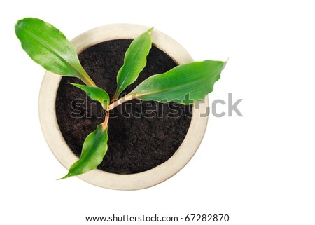 Top close up view of houseplant in ceramic pot isolated on white