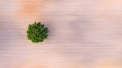 top down aerial view on a lone tree in the middle of a cultivated field, field with tractor tracks, copy space