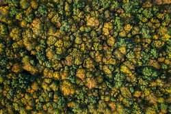 Top down aerial view on colorful autumn treetops, uniform pattern