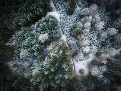 Top down aeriel view of winter forrest in germany on a bright day shot by a drone.
