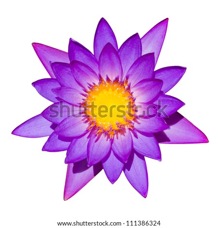 Top down shot of blooming purple lily isolated on a white background.