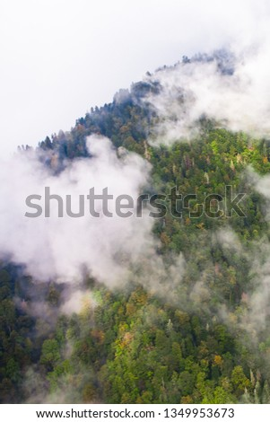 Top down turquoise forest on the mountainside under the clouds- fog (aerial photo with paraglider), summer holidays in the Caucasus in Abkhazia. Saturated color. #1349953673