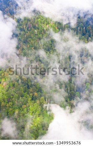 Top down turquoise forest on the mountainside under the clouds- fog (aerial photo with paraglider), summer holidays in the Caucasus in Abkhazia. Saturated color. #1349953676