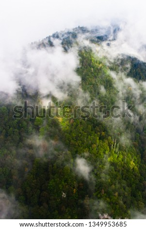 Top down turquoise forest on the mountainside under the clouds- fog (aerial photo with paraglider), summer holidays in the Caucasus in Abkhazia. Saturated color. #1349953685