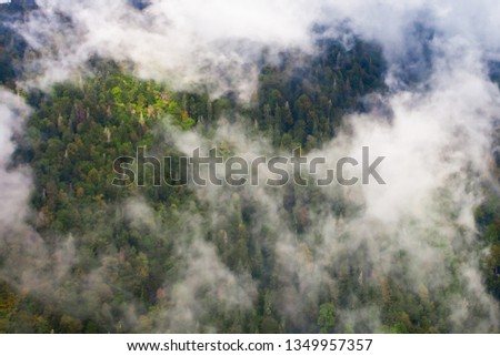 Top down turquoise forest on the mountainside under the clouds- fog (aerial photo with paraglider), summer holidays in the Caucasus in Abkhazia. Saturated color. #1349957357