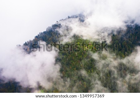Top down turquoise forest on the mountainside under the clouds- fog (aerial photo with paraglider), summer holidays in the Caucasus in Abkhazia. Saturated color. #1349957369