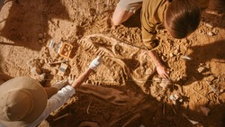 Top-Down View: Two Great Paleontologists Cleaning Newly Discovered Dinosaur Skeleton. Archeologists Discover Fossil Remains of New Species. Archeological Excavation Digging Site.