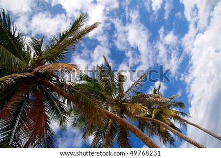 Top of coconut palm on blue sky with clouds