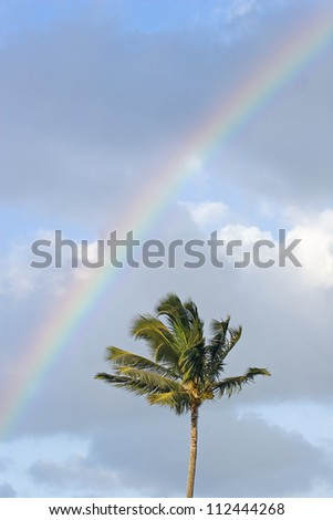 Top of one palm tree with rainbow arching over it through cloudy sky