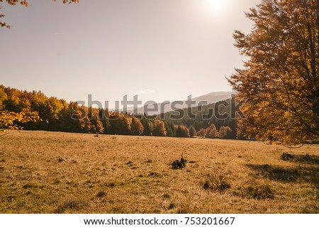 top of the trees in autumn forest at sunset #753201667