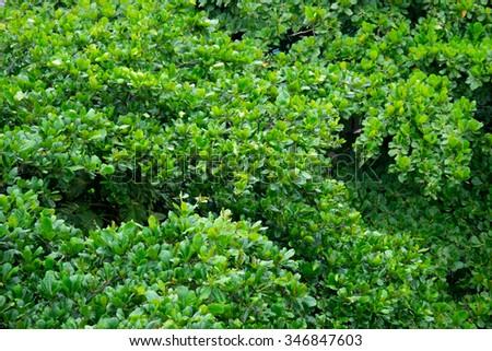 Top of trees - Leblon, Rio de Janeiro, Brazil Topo das árvores - Leblon, Rio de Janeiro, Brasil Foto stock ©